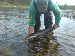 laxfiskepolitiken
